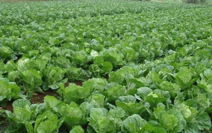 雷火电竞下载用于蔬菜种植